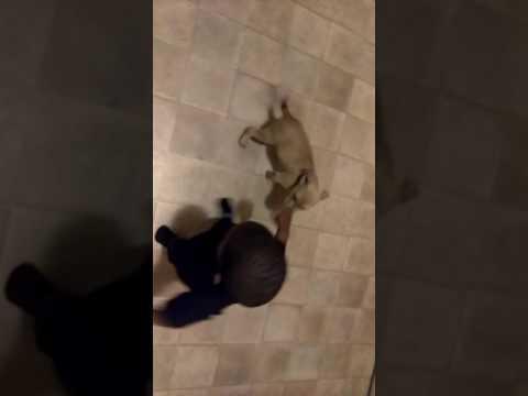 Adopt Nero on Adopt-a-Pet.com