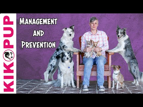 Using Management and Prevention when Training Dogs