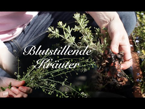 Viriditas Heilpflanzenvideo: Blutstillende Kräuter
