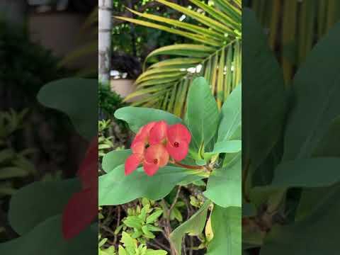 ดอกไม้-ธรรมชาติ-#ใบด่าง-#ต้นไม