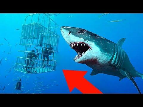 10 Самых Мощных Акул в Мире