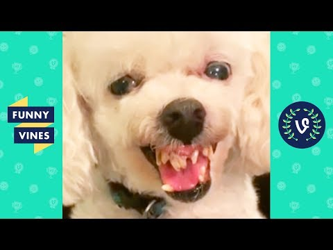 TRY NOT TO LAUGH - Funny Pet Videos!