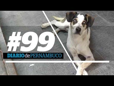 A morte de uma cachorrinha levantou a discursão sobre direito animal