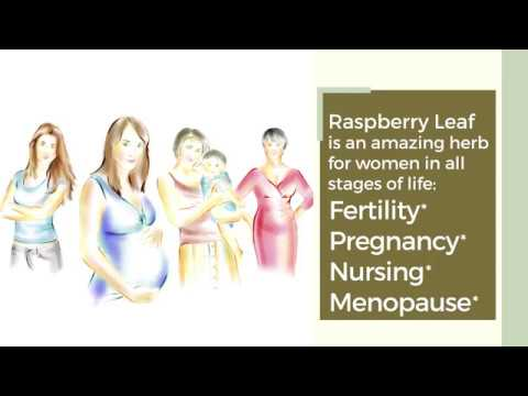 Red Raspberry Leaf: The Most Favored Herb Among Midwives and Herbalists