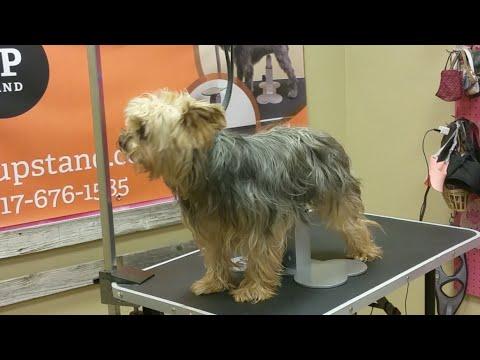 Live Dog Grooming