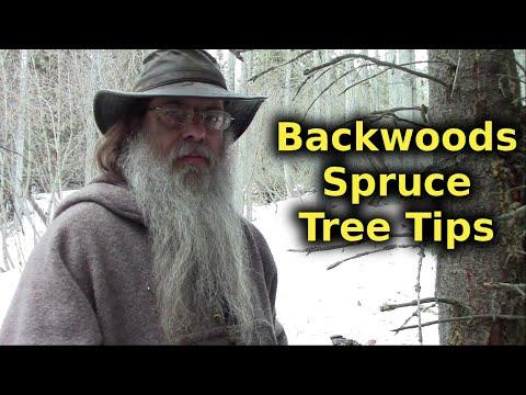 Useful Backwoods Tips On The Spruce Tree