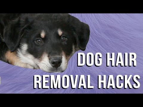 Dog Hair Removal Hacks