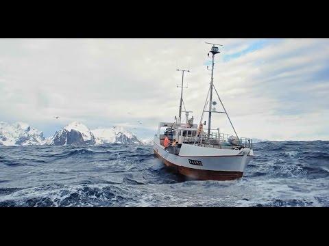 Skrei - Le cabillaud norvégien par excellence