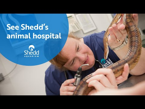 See Shedd's Animal Hospital
