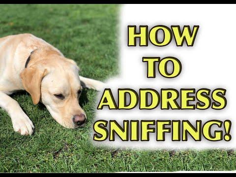 Dog Training Tutorial: LOOSE LEASH SKILLS (Episode 2)