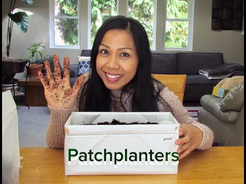 Self Watering Planter by Patch Planters