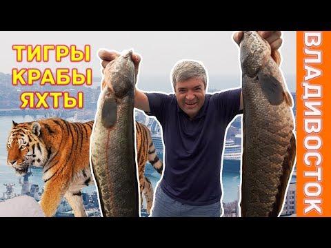 Брутальный Владивосток: охота, прогулка с тиграми, крабы, ретроавтомобили