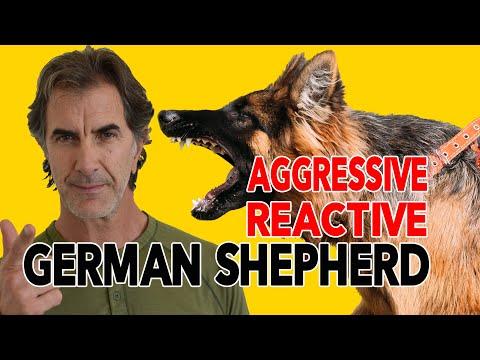 How to Fix a Leash Aggressive Reactive German Shepherd