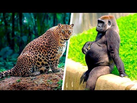 Посмотрите, Как Рождаются Детеныши Животных