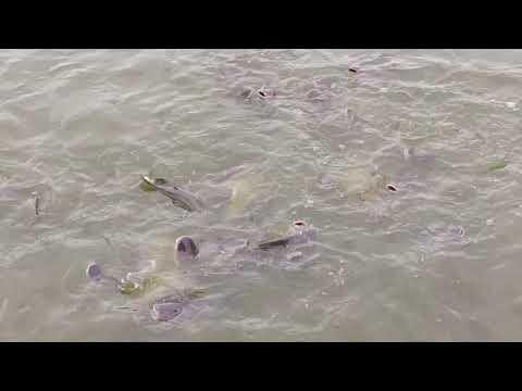 บ่อตกปลาลุงแดง