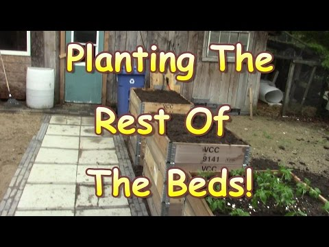 Planting Beans In My New Raised Beds!