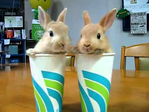 2 Bunnies 2 Cups - Popcorn Edition