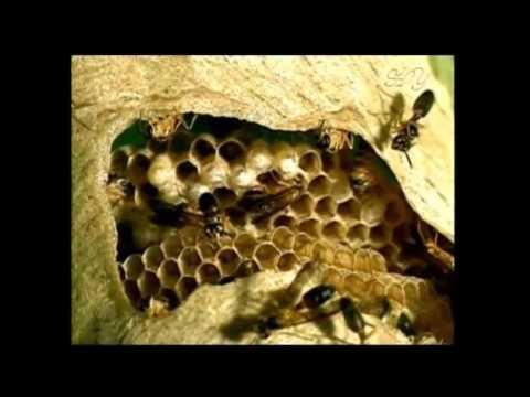 scientific miracle of Quran on GENDER OF HONEY BEE