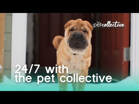 24/7 With The Pet Collective