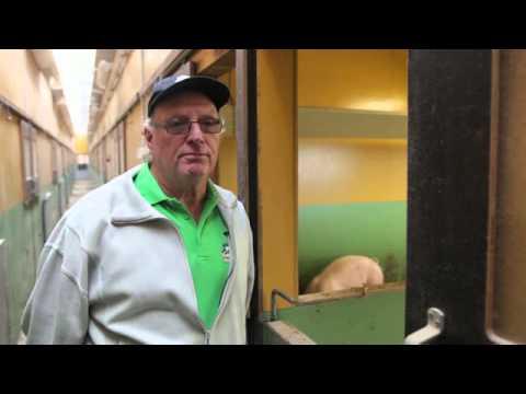 Konsumentfilm Orto Novo, ett klimatsmart alternativ