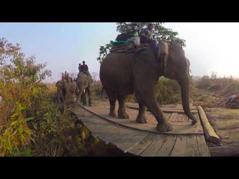 Nepal rhino translocation (360 video)
