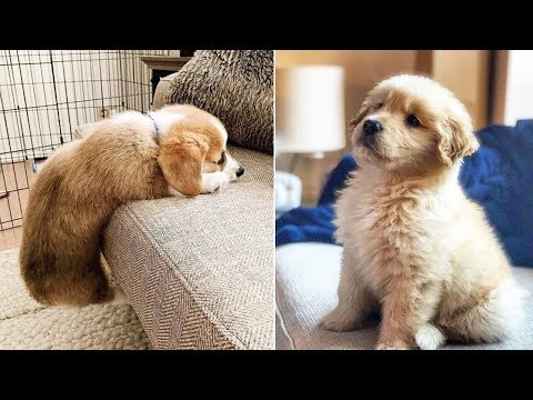 ❤️Cute Puppies Doing Funny Things ❤️#6  Cutest Dogs