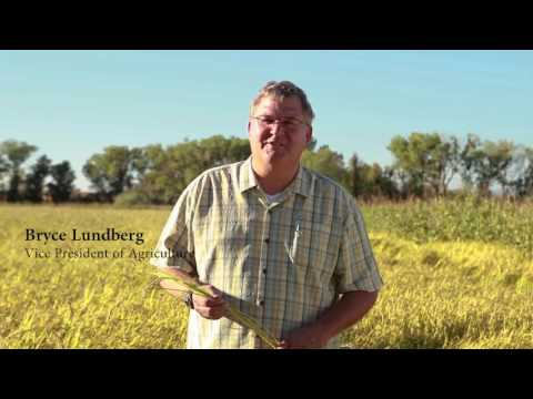 Lundberg Non GMO Project