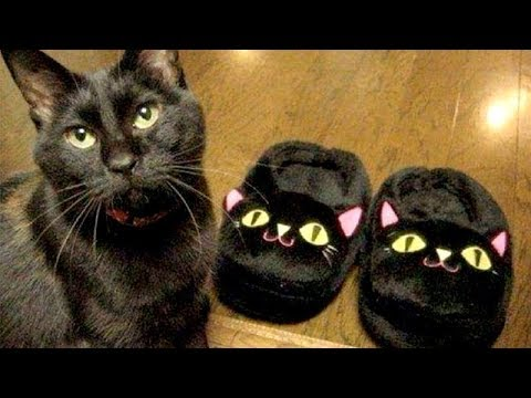 FUNNY CATS will put you in INSTANT GOOD MOOD - Funny CAT compilation
