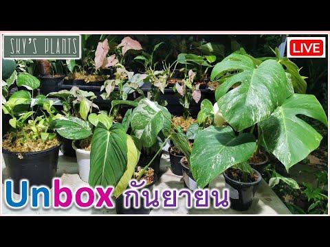 unbox-ต้นไม้-เดือนกันยายน-ไม้ด
