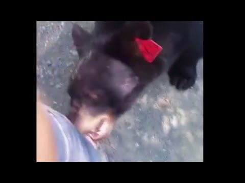 Nerves of steel: Hiker encounters black bears face-to-face, escapes unharmed