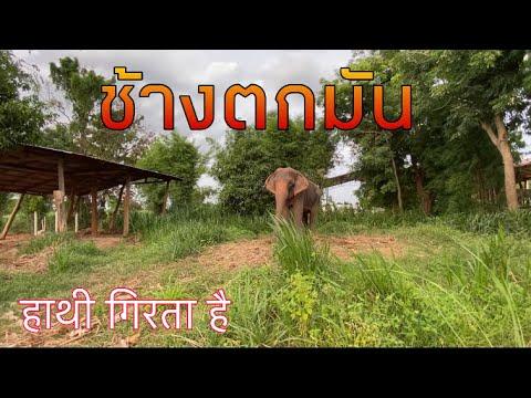 อัพเดท-สีดอทันใจตกมัน❗️-elepha