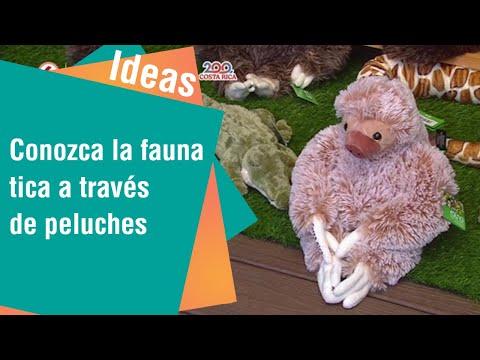 Conozca la fauna costarricense a través de peluches   Ideas