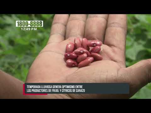 Productores de frijol y cítricos en Nicaragua con gran optimismo