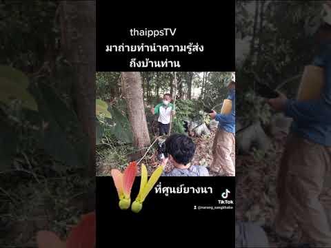ทีวีไทยถ่ายความรู้ยางนาสู่คนไท