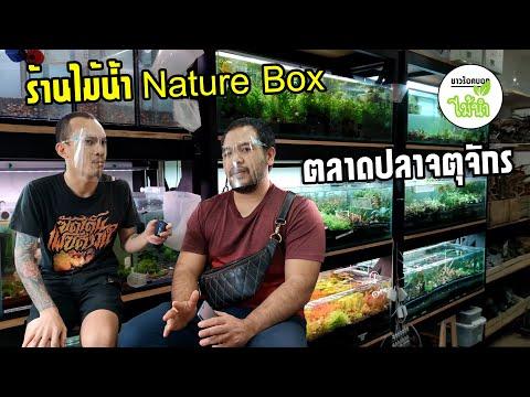 พาชมร้านไม้น้ำ-ร้าน-Nature-Box