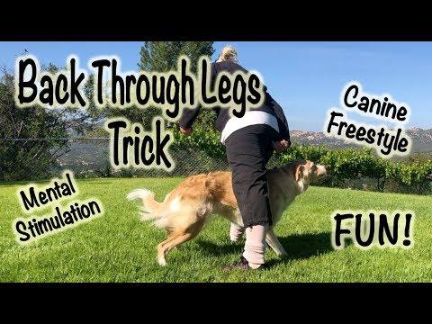 Back through legs - Dog Trick
