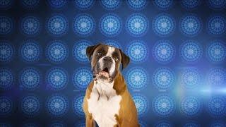 RADLEY X DOGS TRUST