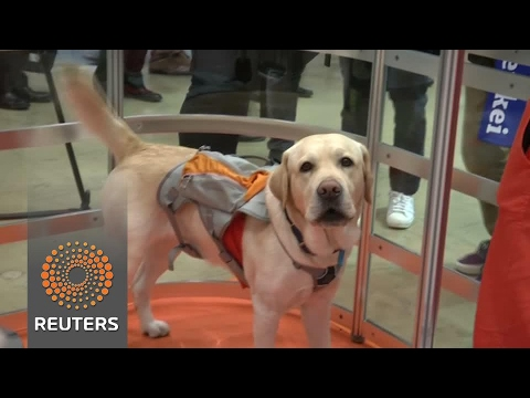 Understanding your pet's emotions with wearable tech