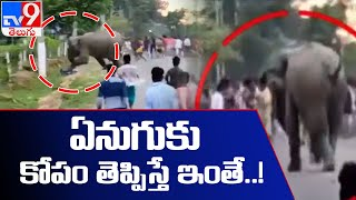 అసోంలో రెచ్చిపోయిన ఎనుగు | Assam: Man crushed by an elephant after crowd teases a herd of elephants - TV9