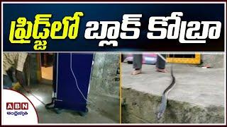 ఫ్రిడ్జ్ లో బ్లాక్ కోబ్రా | Black Cobra In Fridge | Rajamundry | ABN Telugu - ABNTELUGUTV