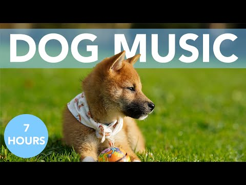 7 HOURS of the ULTIMATE Music for Dogs! Relax Your Dog FAST! NEW 2020!