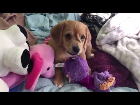 HORNARTIGER FORTSATZ AM KOPF: Dieser Hund sieht wie ein Einhorn aus