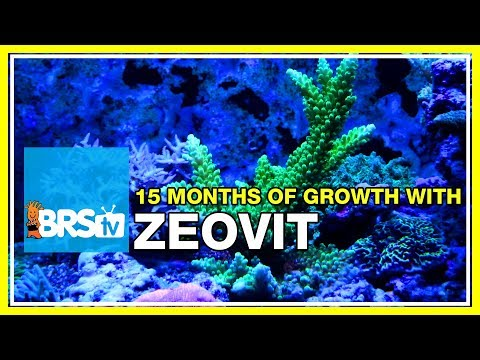 Update 3: Nearly two years of Zeovit and how it worked for us. | 52 Weeks of Reefing #BRS160
