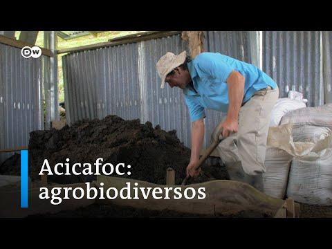 Biodiversos en Centroamérica