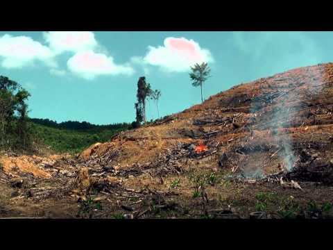 Borneo   West Kalimantan
