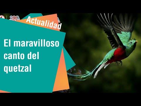El maravilloso canto del quetzal   Actualidad