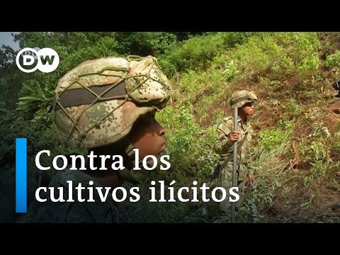Colombia vuelve a apostar por el glifosato