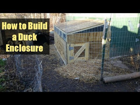 How to Build a Small Animal & Duck Enclosure