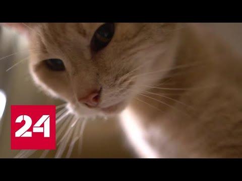 Brexit: кот становится символом протестного голосования - Россия 24