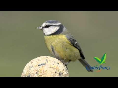Live bird song from Center Parcs UK - number 1